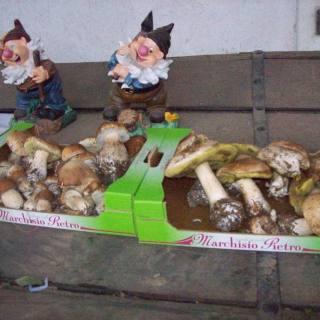 I funghi non li coltiviamo... ma li troviamo!