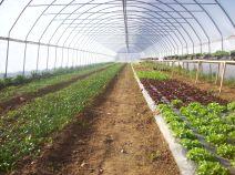 L'ordine è fondamentale anche nella coltivazione